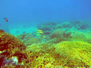 Дайвинг в Нячанге со стаей рыб